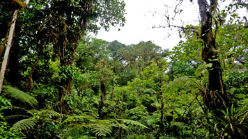Nectandra Garden trail